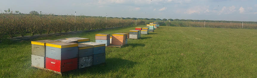 colorful bee hives in a field