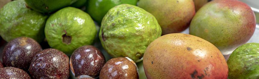Tropical Fruit Suppliers in Florida