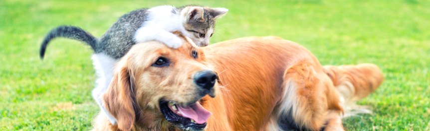 Dog and Cat Movement Requirements / Animal Movement