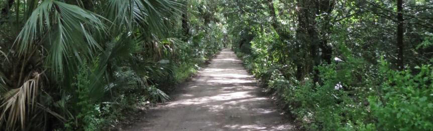 Road Through The Woodlands