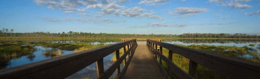 Dock Overlooking Wetlands at Tiger Bay State Forest