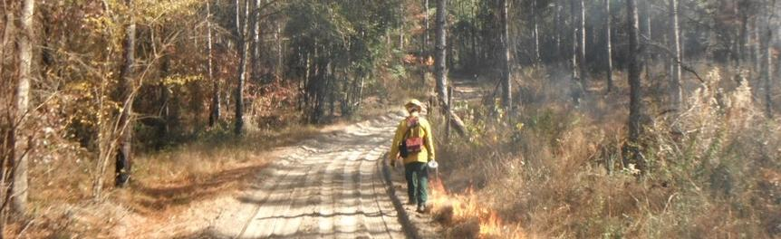 Prescribed Burn at Wakulla State Forest
