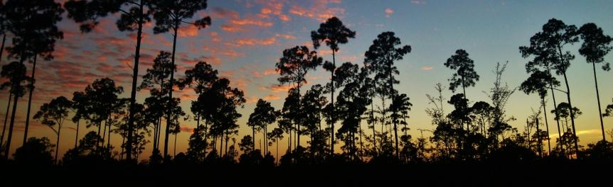 Sunset with Pine Forest Silhouette
