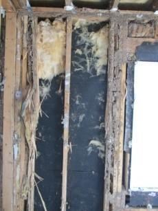 Formosan Termite Program Termites Protect Your Home