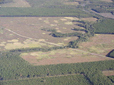 Photo: Expanding cogon grass infestation following a harvest of timber stand in NW Florida