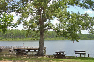 Recreation Areas At Blackwater River State Forest