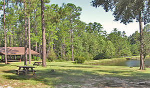 Recreation Areas at Blackwater River State Forest / Blackwater River