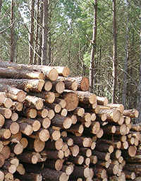 Photo: A pile of lumber. Timber production and harvesting plays an important role in the management of state forests.