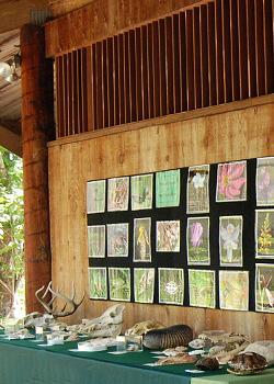 Photo: Cary Forest display of photographs, animal bones