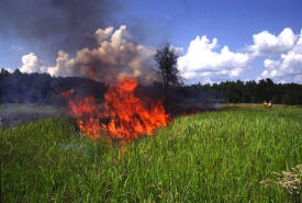 Photo: Burning of cogon grass