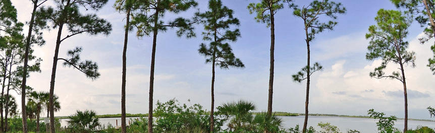 Myakka State Forest / State Forests / Our Forests / Florida