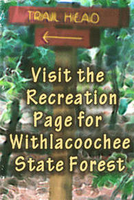Visit the Recreation pages for this state forest!
