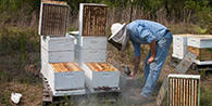 bees_apiary_listview