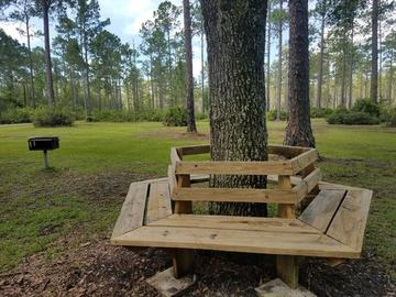 Wrap around tree bench at Carry State Forest.